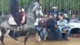Arabian horse dancing