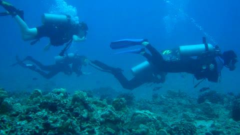 Sutherland's Reef