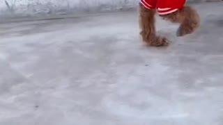 Lovely dog dog
