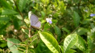Beautiful butterfly rock is in perfect nature