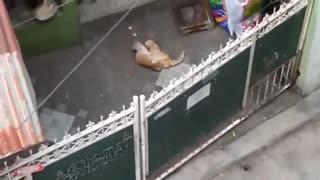 Conflict between two cats