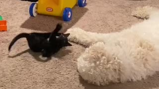 Tiny kitten giant dog staring contest.