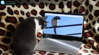 funny cat in this virtual world