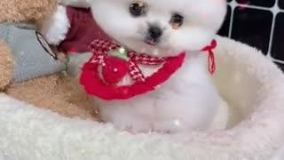 Cute Dog Grooming Teddy Bear : )