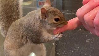 Peanut Butter Squirrel