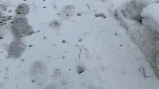 Teaneck winter wonderland