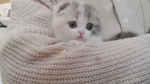 Cute cat 🐱🐈️🐯