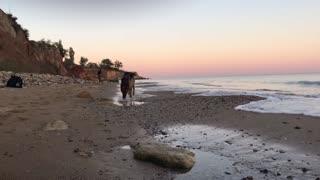 Dog running on a beautiful beach
