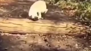 Video compilation Dog/Funny video