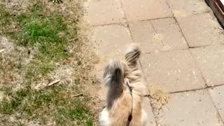 Jasper outside playing