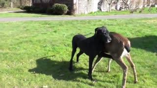DOG AND DEER BEST FRIENDS FOREVER