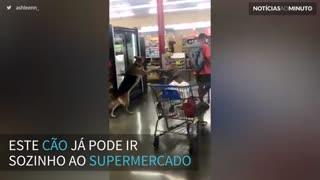 Cão é filmado 'fazendo compras' em supermercado