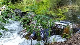 Abbott creek