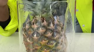 You will never see pineapples same! For Entertainment Purposes Only