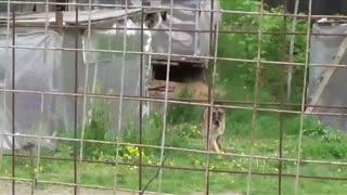 funny dog attack