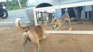 Mirror Prank Dog Hilarious Funny Reaction
