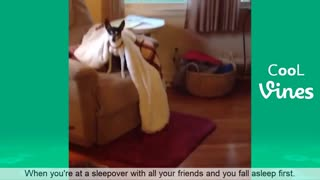 Compilation of Cute funny pets