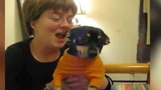 A Dog Bites its Owner