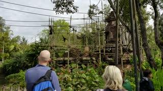 Gibbon Habitat Animal Kingdom Park