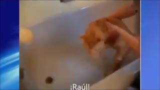 Gato le pide ayuda a Raúl