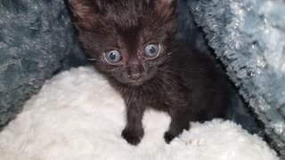 Kitten Black Sitting On Bed While Owner Shower