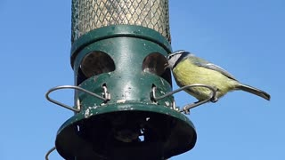 Beautiful green bird eating from a food relationship