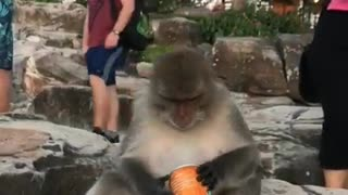 Funny monkey drink