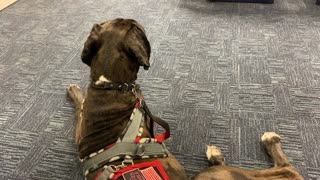 Service Dog: Public Access, Eye Appointment and Supper at Olive Garden!