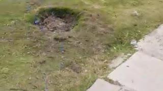 """¿Arboricidio? Conozca por qué 10 árboles fueron """"arrancados"""" de Bocagrande"""
