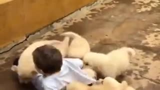 Young boy eaten alive by Dogs