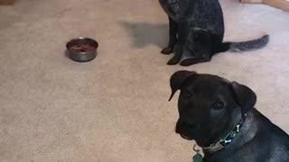 Dogs Impulse Control