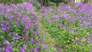 Spring garden Kamakura