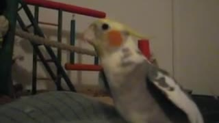 Bird sings happy and you know it