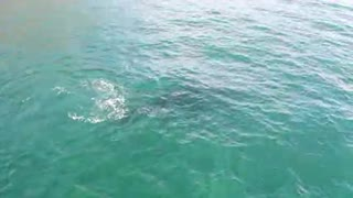 Whale swimming under water
