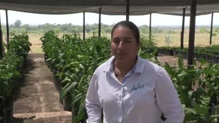 El cacay, el oro líquido de Colombia para la industria cosmética mundial