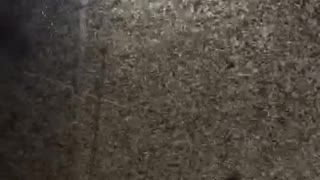 Clouds of Insects Swarm through City