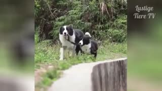 Very Cute - One Of The Best Animal Compilation Videos
