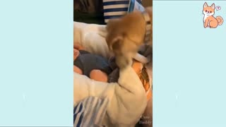 Cute funny dog video to enjoy during this Pandemic period
