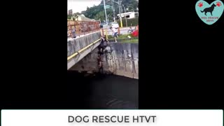 Real life heros dog