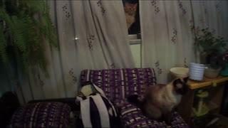 Gatos posan en la ventana