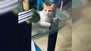 Very funny video for cats
