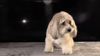 A Cute White Pet Dog Sitting