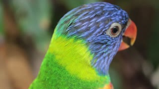 The most beautiful bird in the world