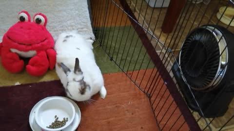 Chuck Bunny...42