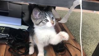 beautiful cat 1