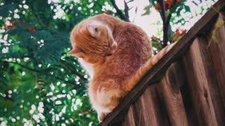 cat cat 12345
