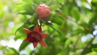 Beautiful nature/ blooms//