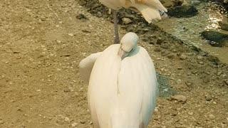 Beautiful birds in Sharjah Wild Life Aviary Section