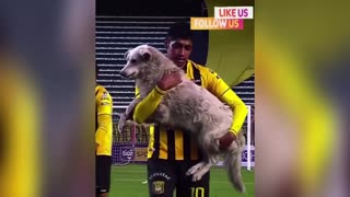 A gentle dog sweep of soccer matches in Bolivia