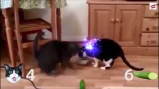 When cats are afraid, what will happen?